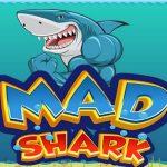 MAD Shark 2021